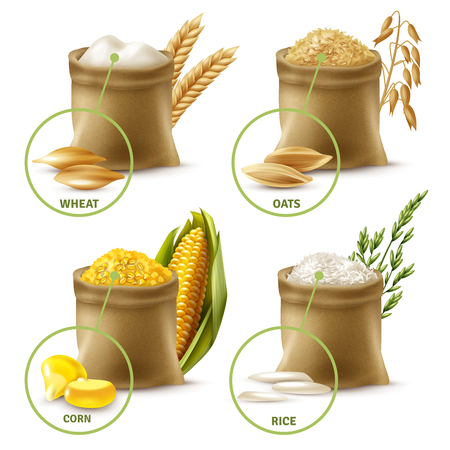Illustration pour Set of agricultural cereals including sacks with wheat flour, oat, corn and rice isolated vector illustration - image libre de droit