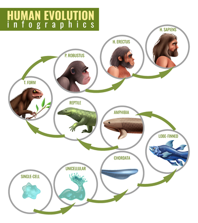 Ilustración de Human evolution infographics with development stages from single cell to homo sapiens on white background vector illustration - Imagen libre de derechos