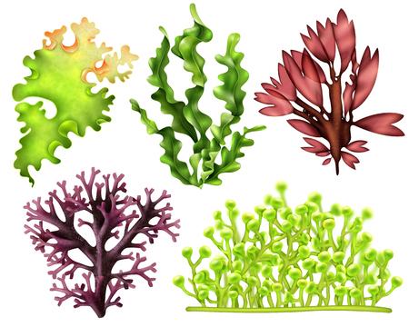 Illustration pour Set of realistic sea weeds - image libre de droit