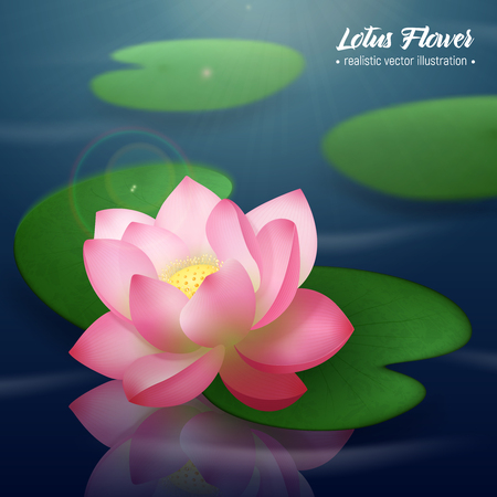 Illustration pour Pink lotus flower with two wide disc shaped leaves floating on water realistic background poster vector illustration - image libre de droit