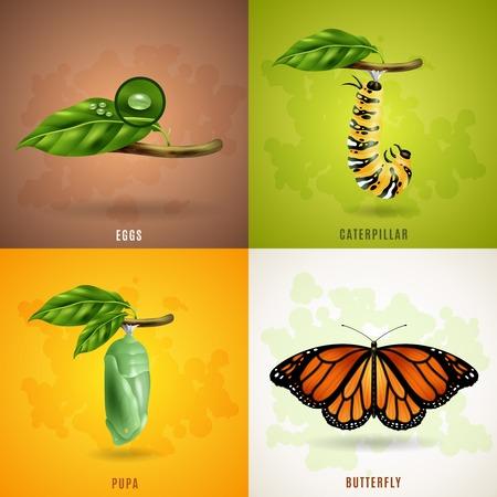 Ilustración de Butterfly 2x2 realistic design concept set developing stage of butterfly from eggs caterpillar pupa to imago vector illustration - Imagen libre de derechos