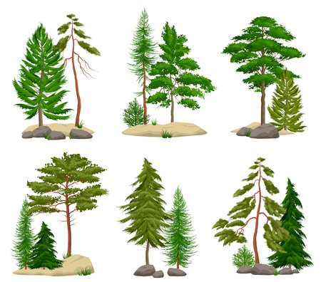 Illustration pour Set of realistic pine forest elements with conifer trees soil and boulders isolated vector illustration - image libre de droit