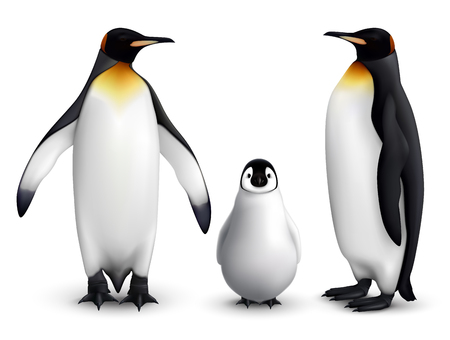 Illustration pour King penguin family with chick realistic closeup image with adult birds front and side view vector illustration - image libre de droit