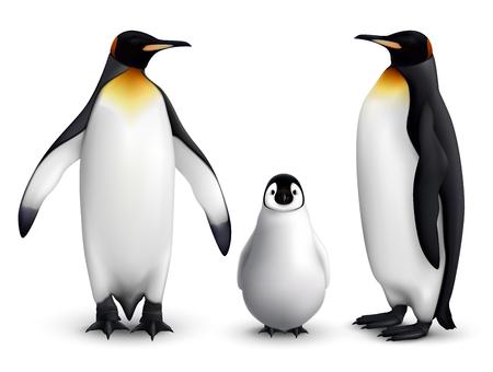 Ilustración de King penguin family with chick realistic closeup image with adult birds front and side view vector illustration - Imagen libre de derechos