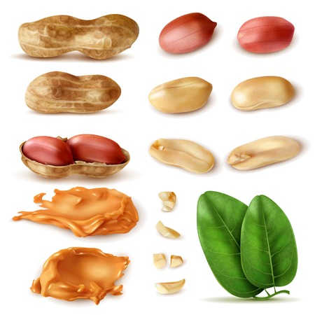 Illustration pour Realistic peanut set of isolated images of beans in shell with green leaves and peanut butter vector illustration - image libre de droit