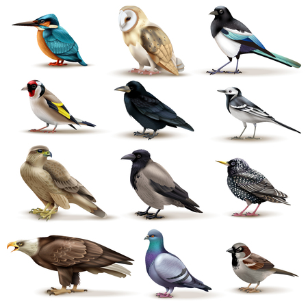 Illustration pour Birds set of twelve isolated images of colourful birds with different species on blank background vector illustration - image libre de droit