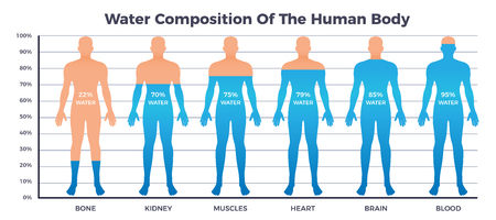 Illustration pour Body and water chart with water composition of human body symbols flat vector illustration - image libre de droit