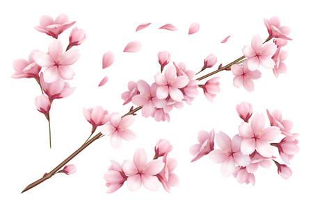 Illustration pour Realistic set of beautiful sakura branches flowers and petals isolated on white background vector illustration - image libre de droit