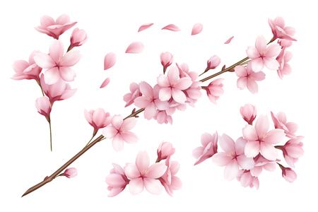 Ilustración de Realistic set of beautiful sakura branches flowers and petals isolated on white background vector illustration - Imagen libre de derechos
