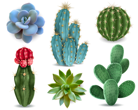 Illustration pour Popular indoor plants elements and succulents rosettes varieties including pin cushion cactus realistic collection isolated vector collection - image libre de droit