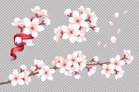 Illustration for Transparent background with realistic blooming cherry flowers and petals vector illustration - Royalty Free Image