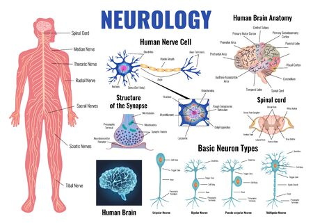 Illustration pour Neurology and human brain anatomy set flat isolated vector illustration - image libre de droit