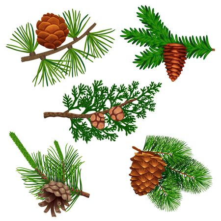Illustration pour Conifer pine tree cone set with colourful isolated images of coniferous twigs with fir needle foliage vector illustration - image libre de droit