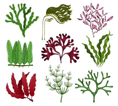 Illustration pour Seaweeds colorful flat set with 9 red brown green algae species against white background isolated vector illustration  - image libre de droit