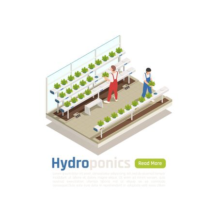 Illustration pour Modern hydroponic greenhouse isometric composition with 2 workers checking plants  growing without soil irrigation system vector illustration - image libre de droit