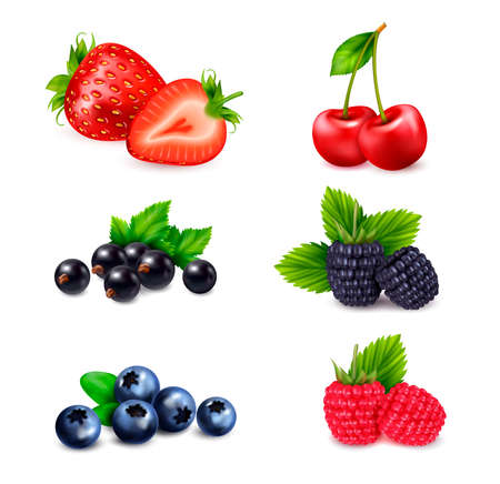 Illustration pour Berry fruit realistic set with isolated colourful images of berries sorted by different species with shadows vector illustration - image libre de droit