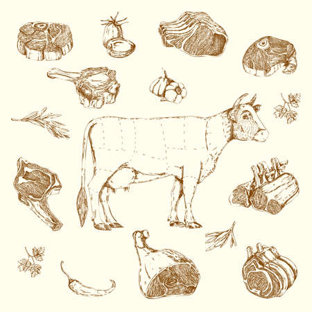 Illustration for Meat hand drawn elements set with cow and parts of beef herbs and vegetables isolated vector illustration - Royalty Free Image