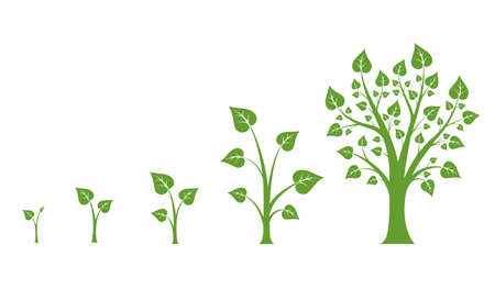 Illustration pour Tree growth vector diagram. Green tree growth, nature leaf growth, plant growh illustration - image libre de droit