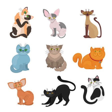 Photo pour Cartoon domestic cats vector. Illustration of animal with tail and whiskers - image libre de droit