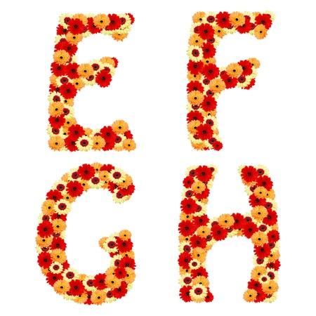 Colour flower font from geber flowers isolated  Letter E,F,G,H