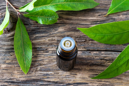 Photo for A bottle of essential oil with fresh bay leaves - Royalty Free Image
