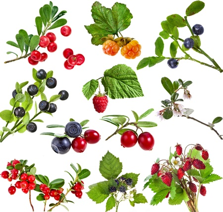 Collection set of wild forest berries isolated on white background