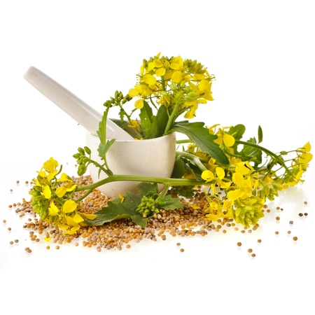 mortar with pestle and flowering mustard isolated on white background