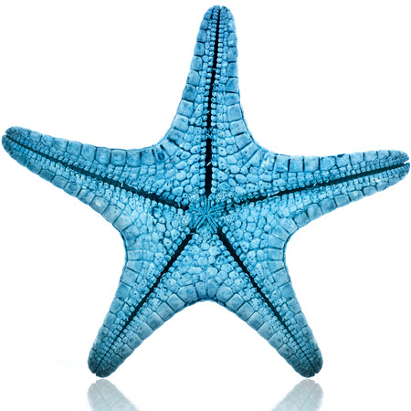 Single Blue starfish isolated on white background