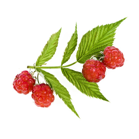 raspberries close up macro shot isolated on white backgroundの写真素材