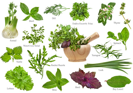 Fresh herbs collection set close up isolated on white background