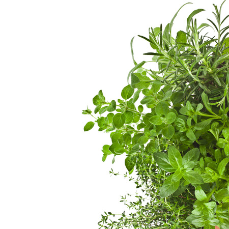 Useful herbs border isolated on white background
