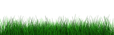 3d illustration of green grass foliage isolated over white background