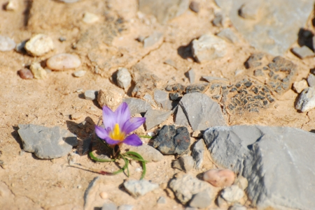 Lonely flower in rocky desert terrain