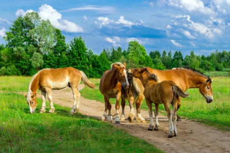 Horses On A Path In The Green Grass