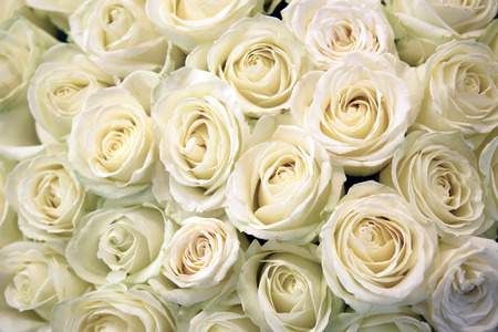 White roses. Floral Texture and background. Flowers closeup. Wedding and wedding accessory. The rose petals. A large bouquet.