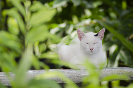 white cat on green garden chillout