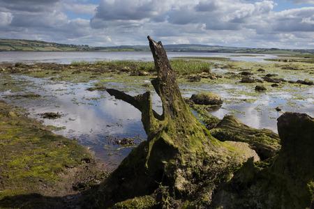 Remote wetland in Ireland