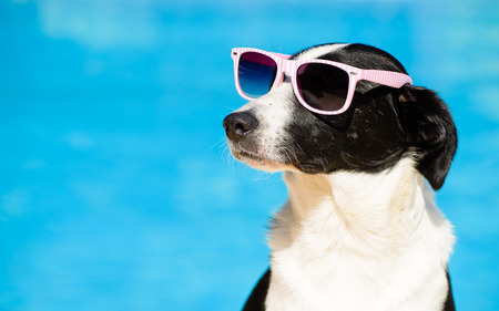 Foto de Funny female dog wearing sunglasses and sunbathing at swimming pool on summer. Summertime vacation concept. - Imagen libre de derechos