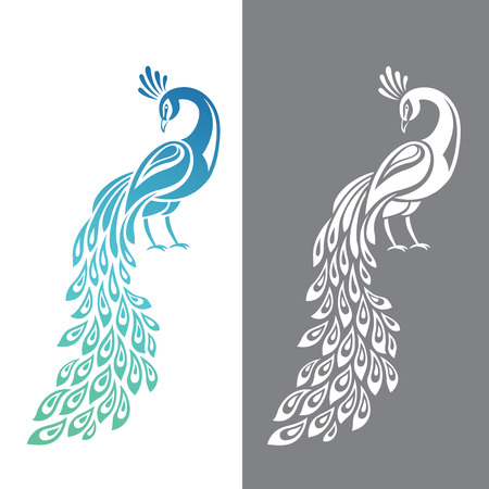 Illustration pour Vector illustration of peacock in color and monochrome variations - image libre de droit