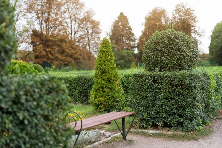 Park with shrubs and green lawns, landscape design. Topiary, green decor in the park.
