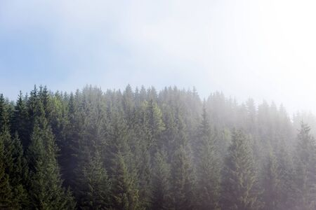 Photo pour Misty fog in pine forest on mountain slopes in the Carpathian mountains. Landscape with beautiful fog in forest on hill - image libre de droit