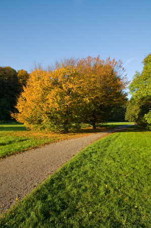 Park with autumnal-colored deciduous trees on sunny day