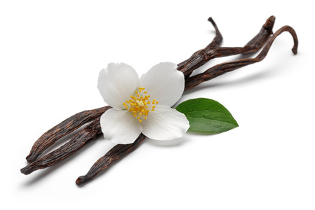 Vanilla bean with jasmine flower and leaf isolated on white backgroundの写真素材