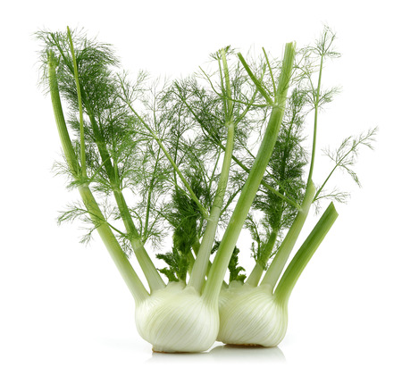 Photo for Fresh fennel bulbs isolated on white background - Royalty Free Image