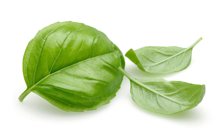Photo pour Fresh green basil leaves isolated on white background - image libre de droit