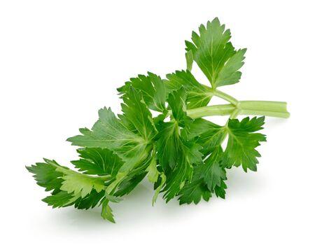Photo for Fresh celery leaves isolated on white background - Royalty Free Image