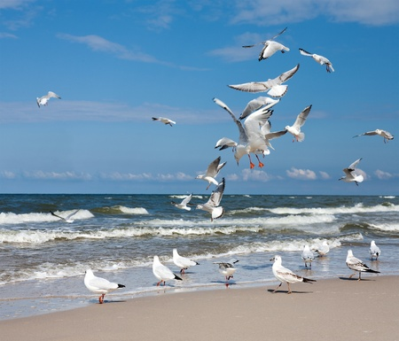 Group of Seagulls