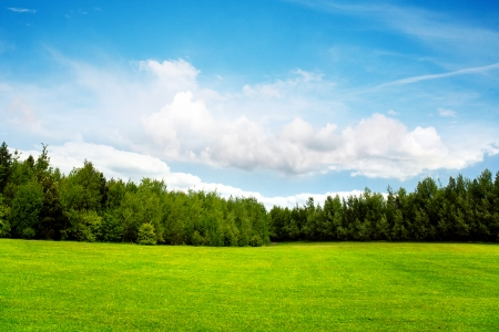 Photo for Field trees and blue sky - Royalty Free Image