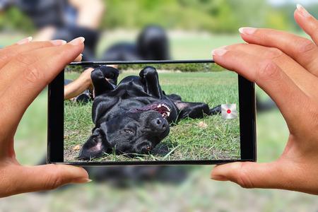 Photo pour Woman with mobile phone photos dog. - image libre de droit
