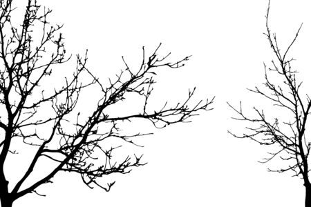 Illustration pour Vector silhouette of trees on white background. Symbol of forest. - image libre de droit